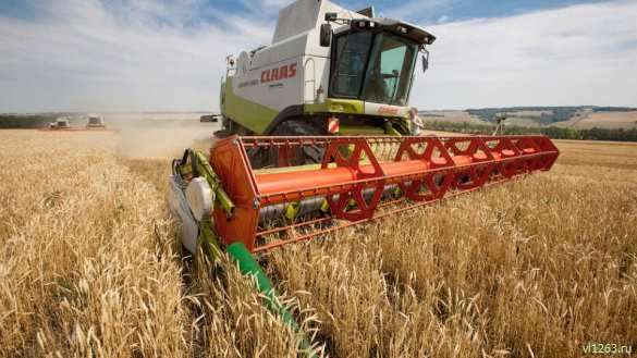 Минсельхоз США прогнозирует в России один из лучших урожаев пшеницы в истории | Русская весна